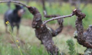 long pruned